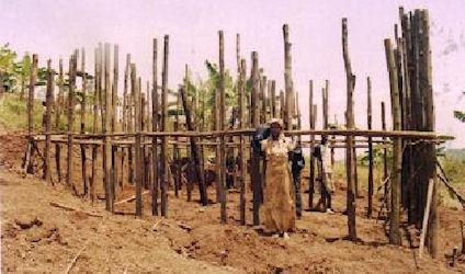 Rwanda and Tanzania: 2012 Plans